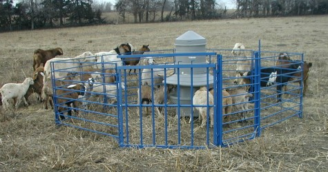 Lamb/Kid Creep Feeder from Sydell. {picture credit}