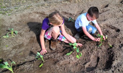 For the Love of Brussel Sprouts...the Daily Farm Adventures at The Lowe Farm