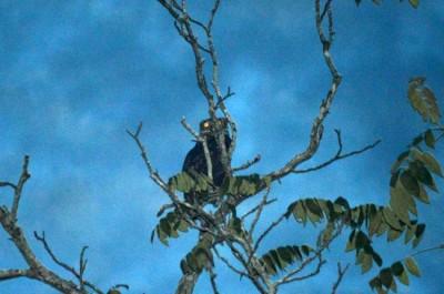 owl at night 3