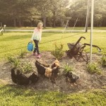 Yard Birds…the Daily Farm Adventures {81}